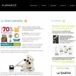 Le Labrador: Dresser son chien labrador