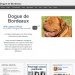 Dogues de Bordeaux : infos, santé, caractéristiques…