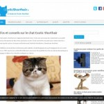 Guide de l'exotic shorthair