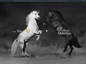 L'élevage Manciais à Saint-Lô – Vente et élevage chevaux