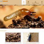 Traitement termites Landes (Mont-de-Marsan) – Garros Traitements